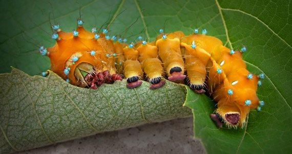 Control Pests