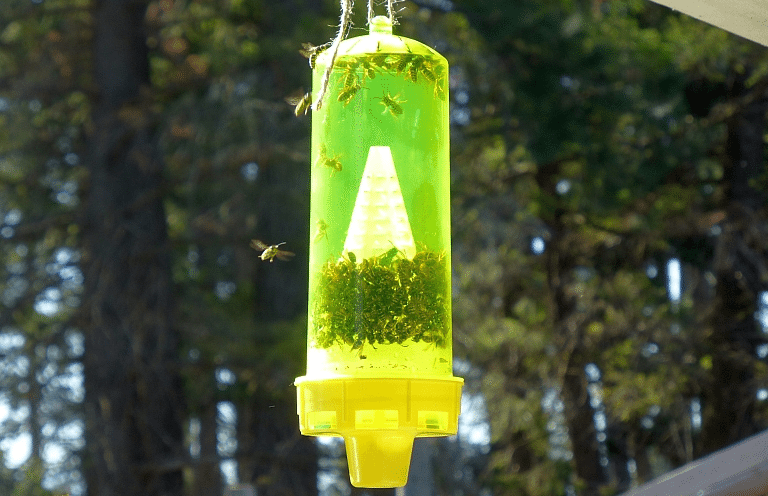 Natural Yellow Jacket Traps