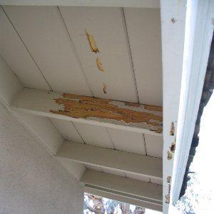 Termite attack image