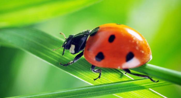 Natural Pest Control-What Is It And Why Is It Important?