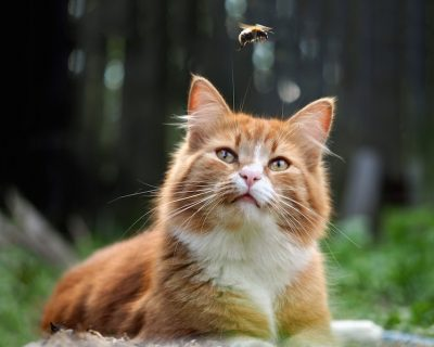 Everything You Need To Know About Yellow Jacket Sting On Cats