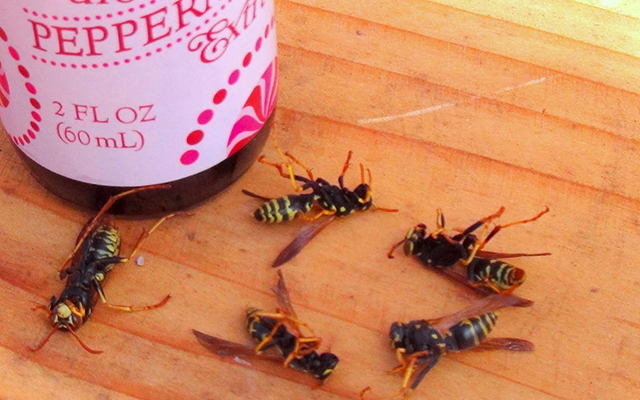Drive Away The Wasps With Yellow Jacket Repellent Essential